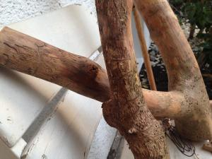 Borkenkäfer-Holzmuster, genagte Larvengänge