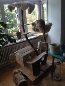 Katzenkratzbaum, Katzenhütte: erstes Testliegen oben
