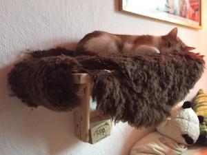 Katzenhochbett, Probeschlafen durch Besitzer